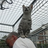 23rdsept13cattery012